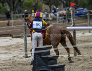 horse-CW-0854-_CLW9757