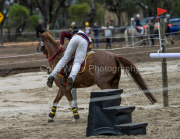 horse-CW-0855-_CLW9758