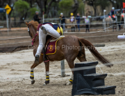 horse-CW-0856-_CLW9759