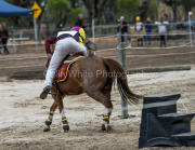 horse-CW-0857-_CLW9760