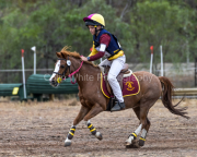 horse-CW-0861-_CLW9776