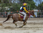 horse-CW-0869-_CLW9797