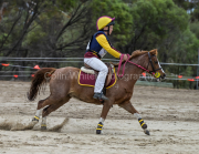 horse-CW-0870-_CLW9802