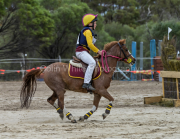 horse-CW-0871-_CLW9803