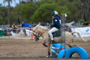 horse-CW-0876-_CLW9815