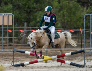horse-CW-0879-_CLW9821