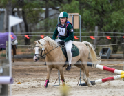 horse-CW-0881-_CLW9824