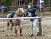 horse-CW-0882-_CLW9828