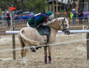horse-CW-0883-_CLW9830