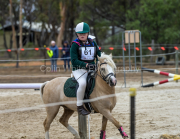 horse-CW-0884-_CLW9831