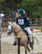 horse-CW-0885-_CLW9832