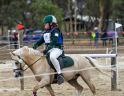 horse-CW-0886-_CLW9835