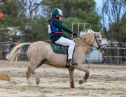 horse-CW-0896-_CLW9881