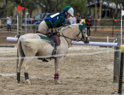 horse-CW-0903-_CLW9893