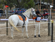 horse-CW-0921-_CLW9949