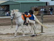 horse-CW-0923-_CLW9954