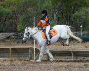 horse-CW-0927-_CLW9980