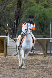 horse-CW-0929-_CLW9983