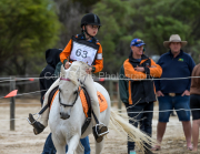 horse-CW-0930-_CLW9994