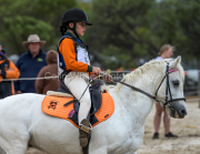 horse-CW-0931-_CLW9995