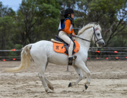 horse-CW-0932-_CLW9999