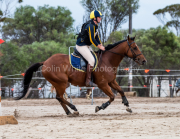 horse-CW-0042-_CLW6509