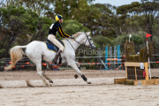 horse-CW-0050-_CLW6538