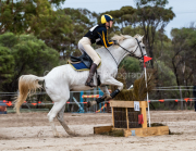 horse-CW-0051-_CLW6539