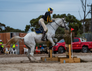horse-CW-0053-_CLW6544