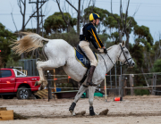 horse-CW-0055-_CLW6546
