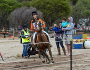 horse-CW-0104-_CLW8798