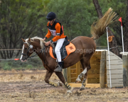 horse-CW-0109-_CLW8815