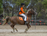 horse-CW-0115-_CLW8827