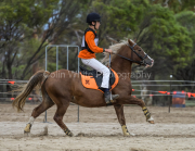 horse-CW-0116-_CLW8828