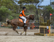 horse-CW-0117-_CLW8831