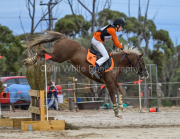 horse-CW-0125-_CLW8849