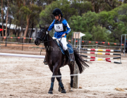 horse-CW-0134-_CLW6564