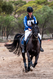 horse-CW-0144-_CLW6582