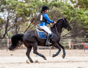 horse-CW-0148-_CLW6588