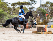 horse-CW-0149-_CLW6590