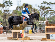 horse-CW-0151-_CLW6592
