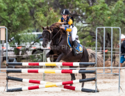 horse-CW-0199-_CLW6678