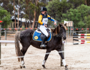 horse-CW-0202-_CLW6682