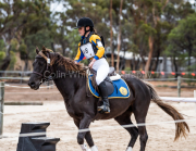 horse-CW-0204-_CLW6684