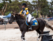 horse-CW-0205-_CLW6685