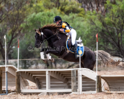 horse-CW-0207-_CLW6695