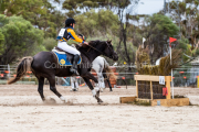 horse-CW-0214-_CLW6712