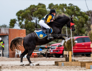 horse-CW-0219-_CLW6723