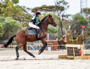 horse-CW-0238-_CLW6765