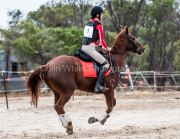 horse-CW-0260-_CLW6809